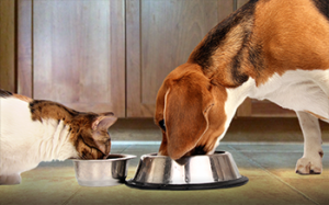 Buying the premium food says more about us than our pets.